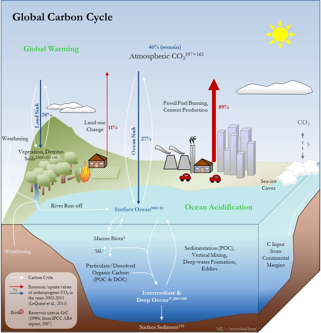 hight resolution of of particular importance are expected future developments of the oceanic carbon sink under future scenarios for greenhouse gas emissions and climate change