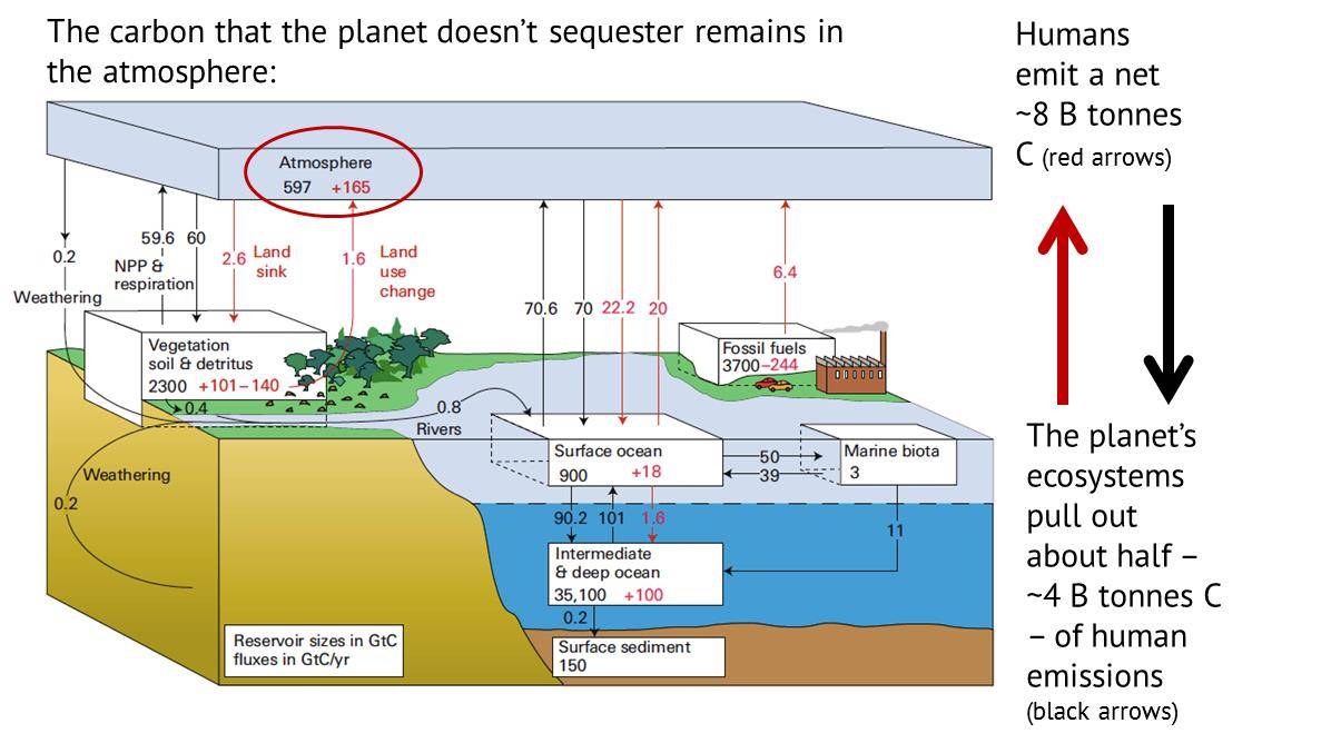 hight resolution of carbon cycle1