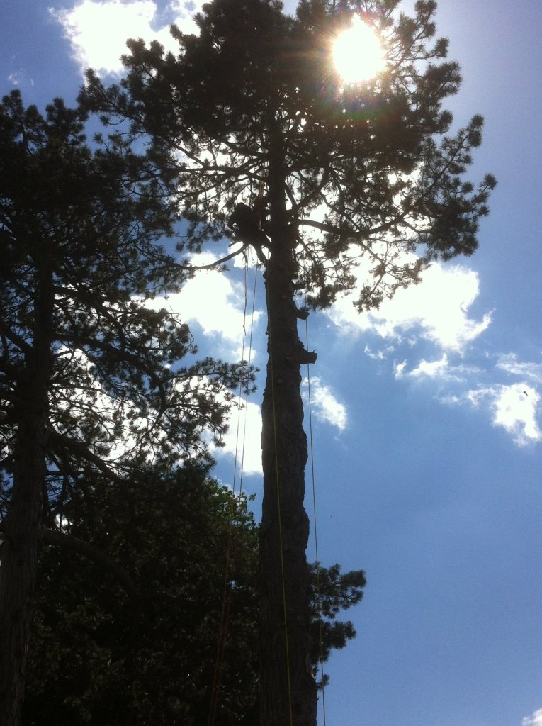 Tree surgery services3