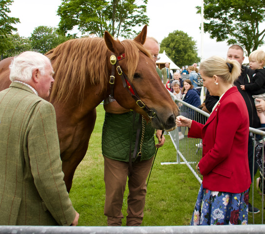 Countess of Wessix meets Suffolk Punch at Norfolk Show