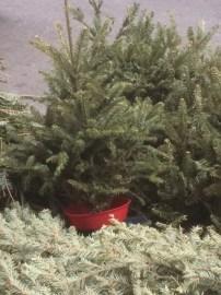 Goodbye 2015 Christmas Tree!