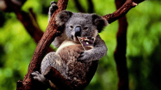Holidays Australia Day Cards Ideal For Friends And Family