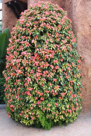 A tower of variegated New Guinea impatiens.