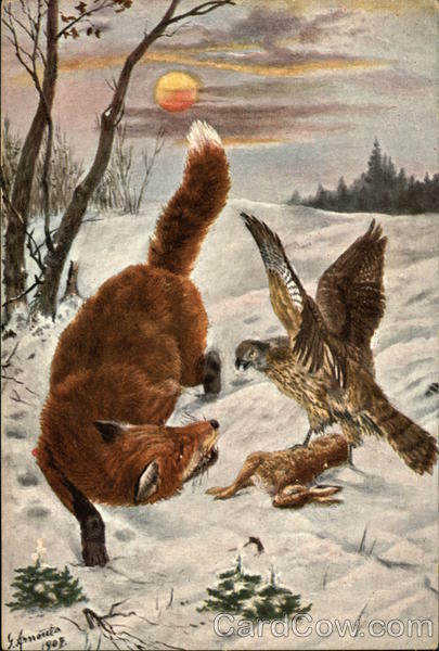Red Fox And Hawk Fighting Over Rabbit In The Snow Multiple