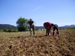 Cigrons i patates 2012