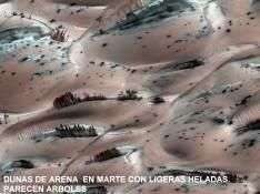 Dunas de Arena en Marte con ligeras heladas .parecen arboles