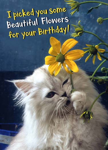 Happy Birthday Cat Images Funny : happy, birthday, images, funny, Flowers, Ecards, Cats,, Funny, Printout, Included