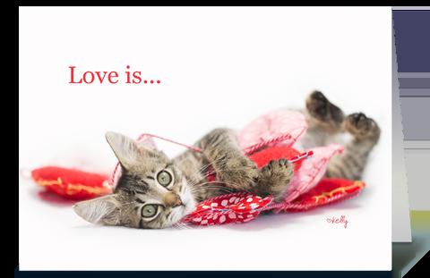 Summer Love Kitten