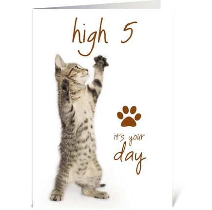 High Five Kitten's Special Day