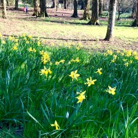 12 family-friendly activities to celebrate St David's Day in and around Cardiff 2019