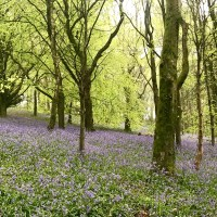 Woodland adventures and beautiful bluebells at Coed y Wenallt, Cardiff