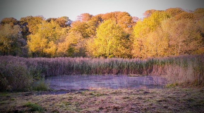 Event 114: Forest Farm Pond Clearance And Raking