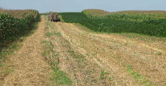 Harvesting_Strips_during-Growing_Season