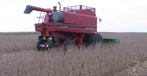 combining_beans