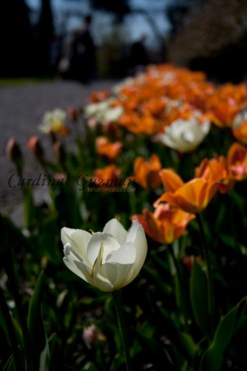 botanisk_8426