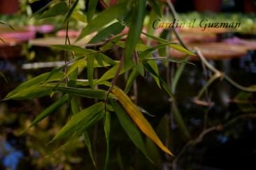 botanisk_8427