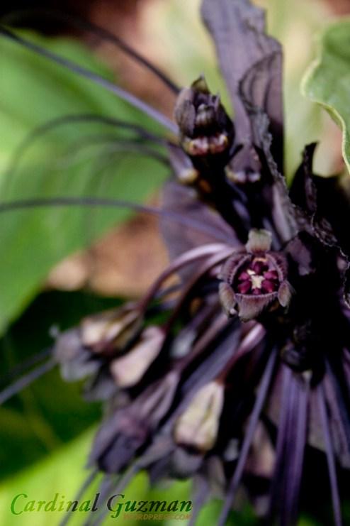 botanisk_8445