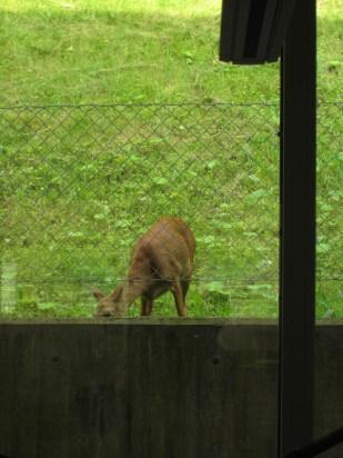 A deer eating breakfast outside the building.