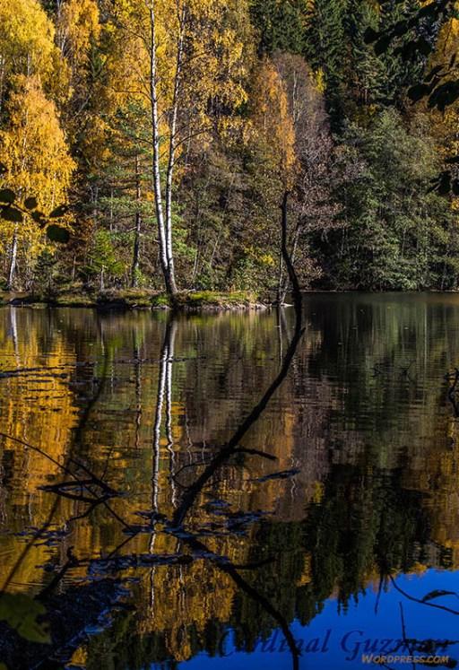 autumn_5738