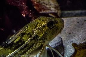 aquarium_1093