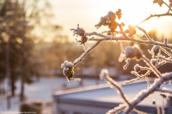 A sunny winter morning.