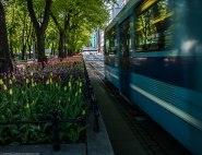 Flowers & tram | take#2