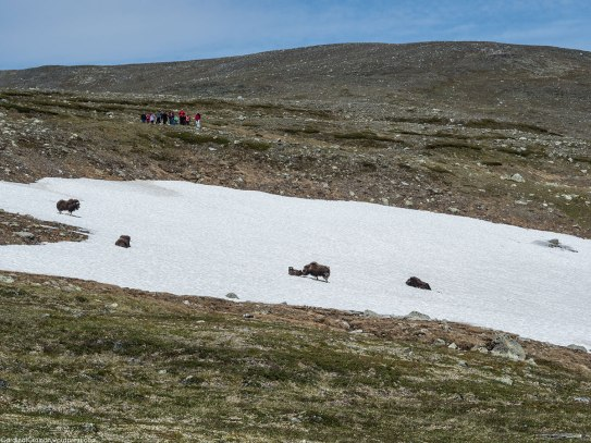 Another group that was on a musk ox safari.