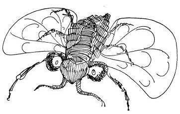 Spelling Bee vs. the Humbug