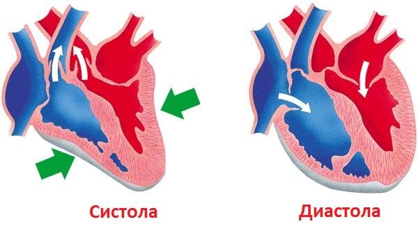 Systole ja diastole
