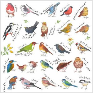 Popular Birds Kate Mawdsley
