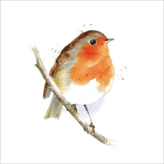 Robin on a Branch Christmas Cards