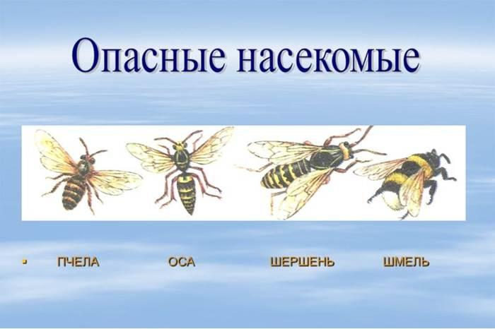 albine moarte pentru dureri articulare)