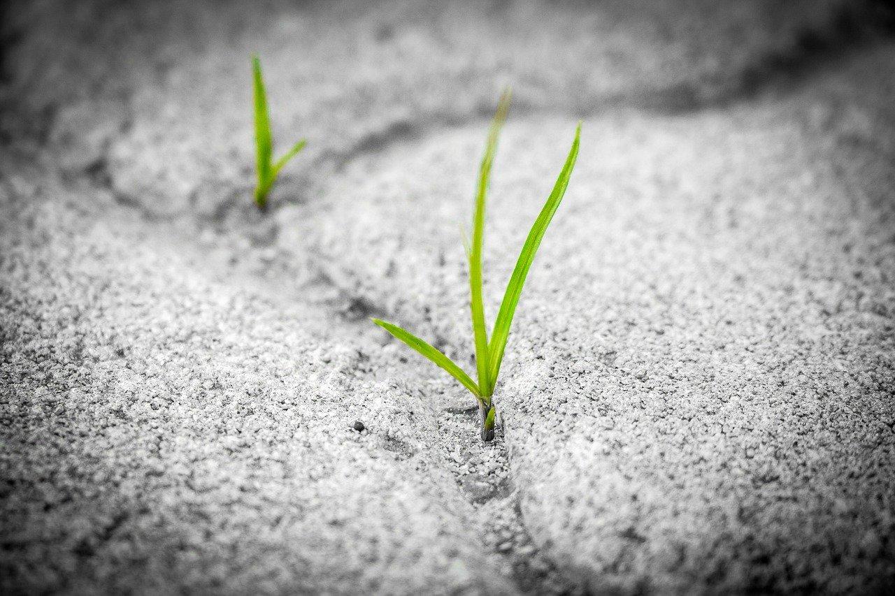 grass, pavement, brick