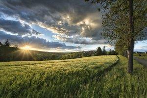 sunset, meadow, grass