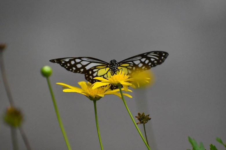 Inside Cameron Highlands Butterfly Farm