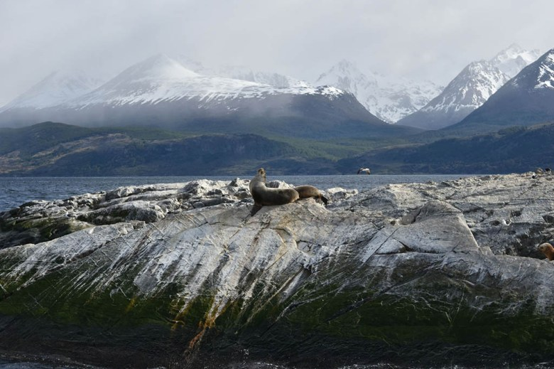 You can see sea lions and penguins near Ushuaia by taking a cruise on the Beagle Channel