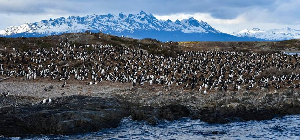Penguins Beagle Channel Ushuaia