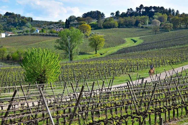 Arnaldo Caprai is one of the largest wine producers in the Montefalco area, with an output of 800,000 bottles per year