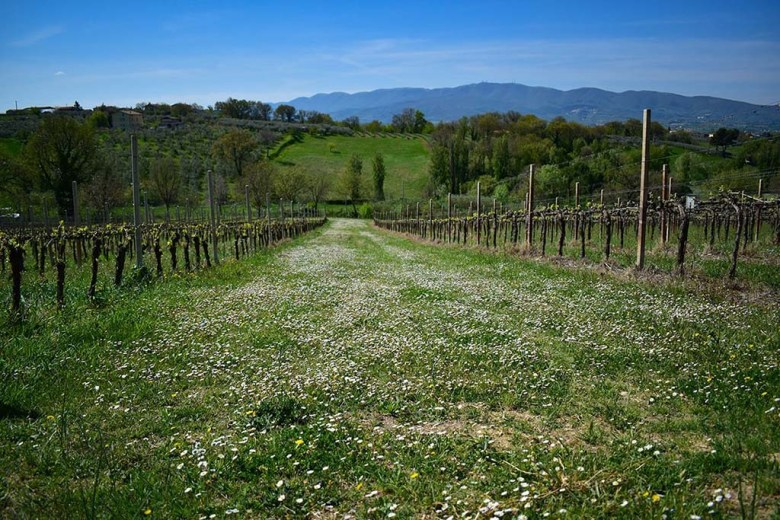 All of Montioni's vineyards are located more than 250 metres above sea level