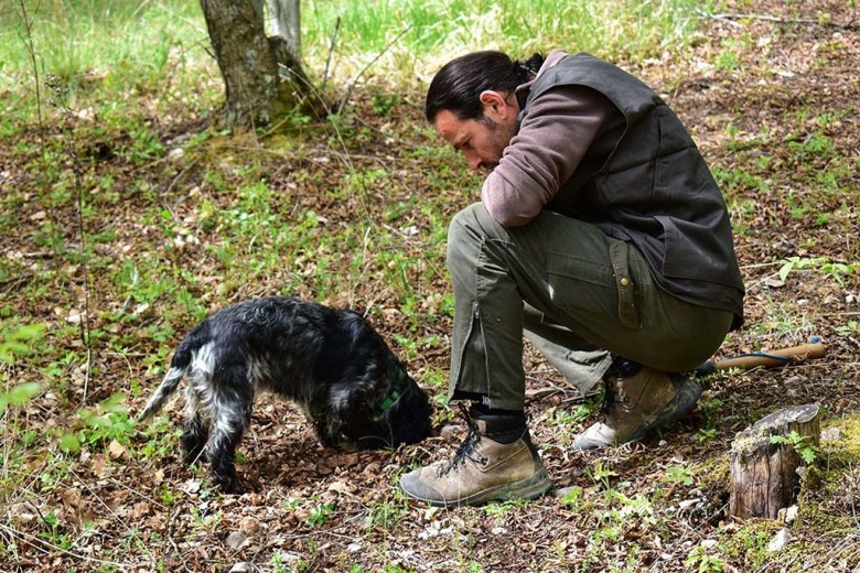 Dogs are specially trained to find truffles that grow just beneath the surface of the ground