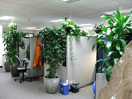 green-office-by-kelly-cookson-on-flickr