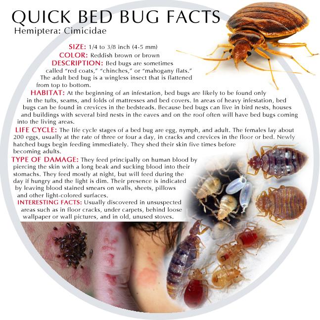 Arizona Pest Control Services ~ Specializing in Termite ...