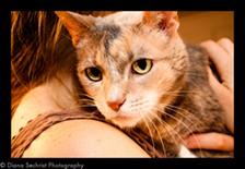 Isn't she cute, she is adoptable!