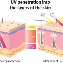 7 Layers Of Skin Diagram Wiring A Gfci Outlet Care In The Sun Tanning Defends Itself From Uv Radiation By Thickening Outer Epidermis Keratin Layer Living Cells Produced Lower Levels