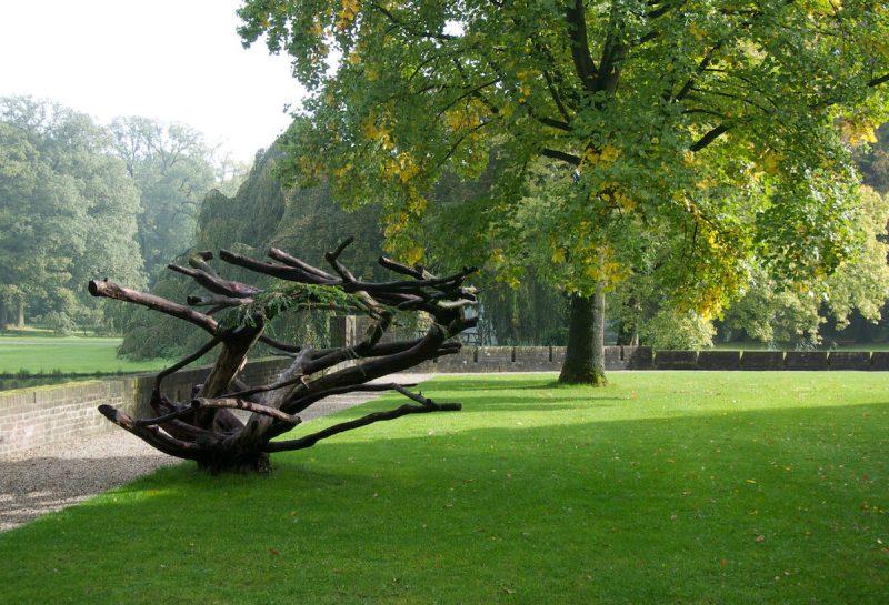 Vanha kelopuu hollantilaisessa puistossa. Valokuva LC