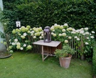 Hortensiat ja kastanjapuuaita