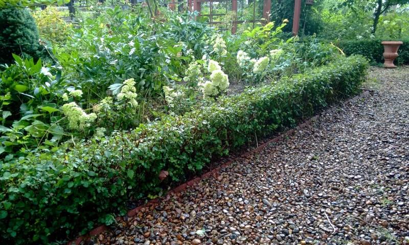 Oman pihan hortensiat