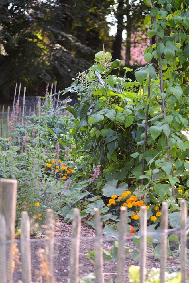 Gemüsebeet im Bauerngarten