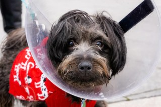 Neutering a Dog: What to expect and what to do after neutering