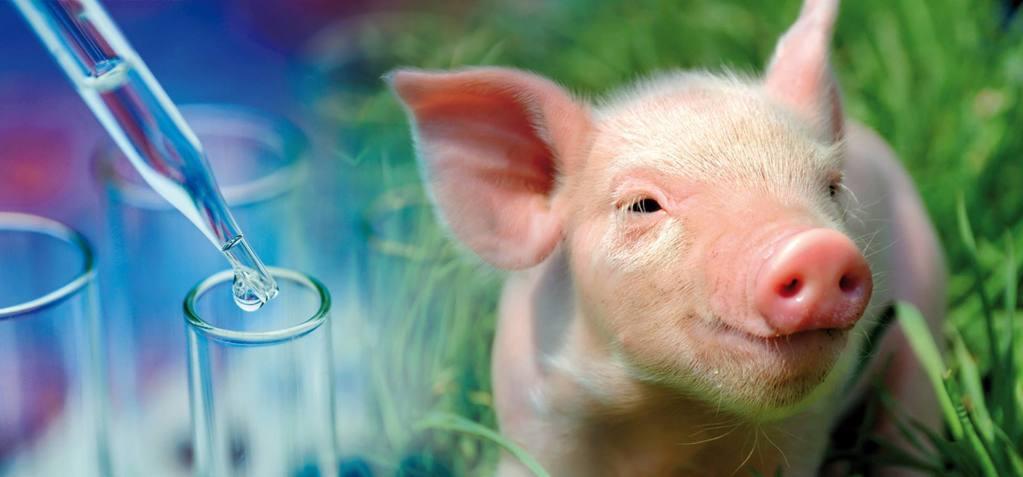 pipette-porc.jpg